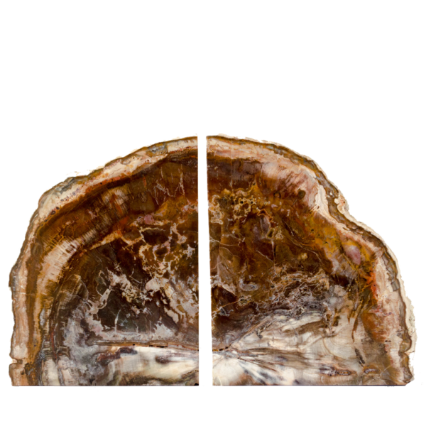 Petrified Wood Bookends