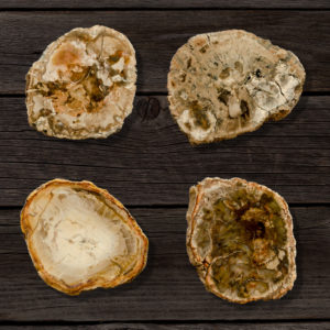 Rough Petrified Wood Coasters