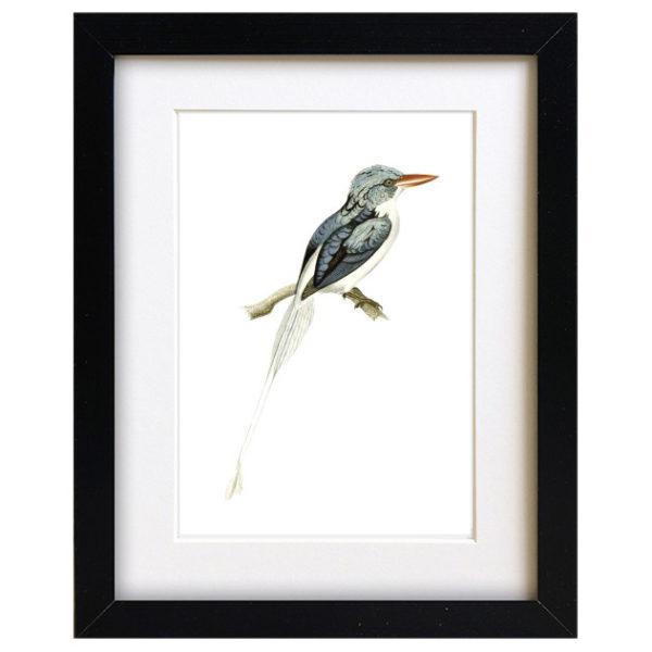 Teal Bird Art Print